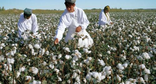 """博創聯動發布""""向往的土地""""計劃,首站助力3700萬畝新疆棉田科技創新"""